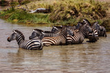 Zebras at the watering