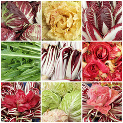 red, yellow and green chicory mix