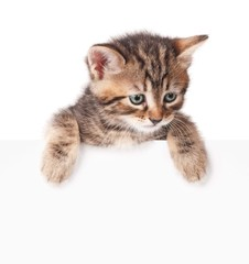 Kitten with a blank