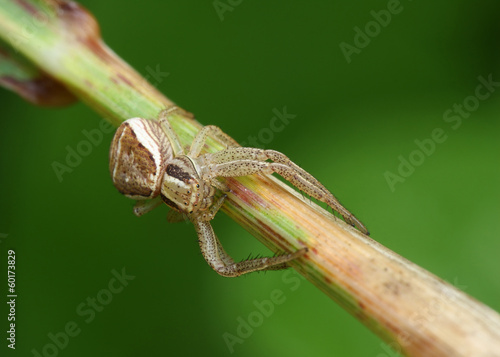 Spider sits on a branch.