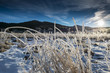 winter landscape with frozen grass