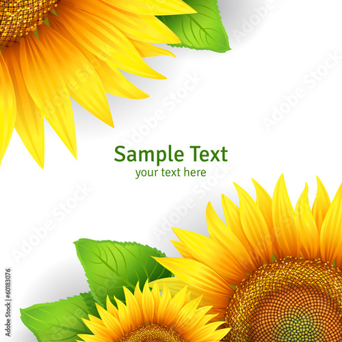 Banner, floral background or template card with sunflowers