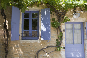 Purple window and door with grape growing on old wall