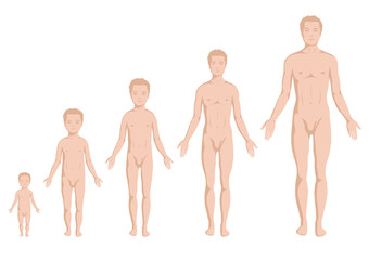 body growing stages, human body anatomy, age stadium