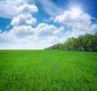 Green meadow.