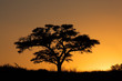 Sunset with silhouetted tree, Kalahari desert