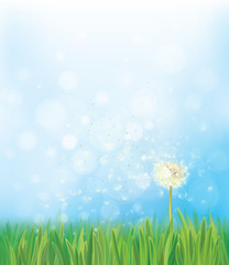 Vector dandelion on spring  background.