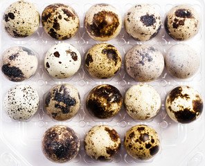Many small quail eggs in a plastic box, isolated on white backgr