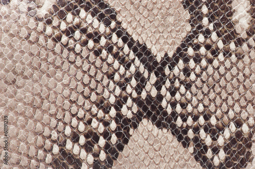 Macro of snake leather