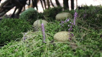 The Common Puffball or Devil's Snuff-box in green moss. No.02