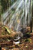 stream illuminated by sunbeam in the forest