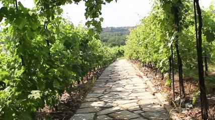 Stone path through vineyard landscape in summer