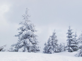 Snowy trees in the mountain valley