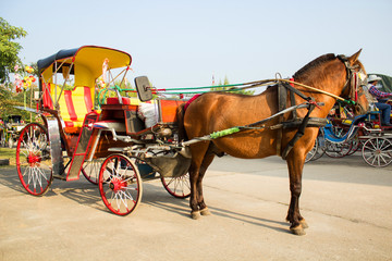 Horse carriages for tourist services in Lampang Thailand