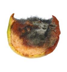 moldy apple isolated on white background, fungi