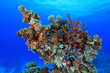 Coral structure in the tropical reef of the red sea