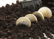 Euro coins grow from the ground - the business concept