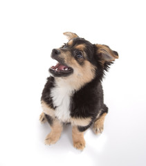 Cute puppy isolated on white background