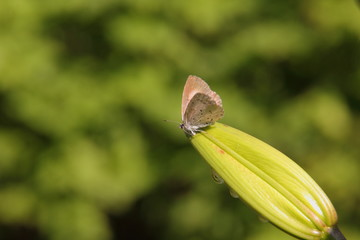 Butterfly. Flower.