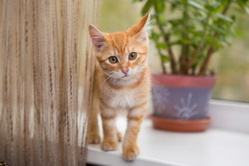 Kitten stands on the windowsill
