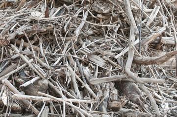 Treibholz, Bioabfälle, angespültes Treibgut, Uferbereiche
