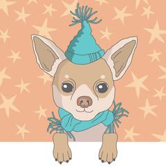 Chihuahua in Cap
