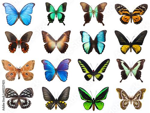 Deurstickers Vlinder Tropical butterflies
