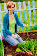 Cultivation - woman and organically grown carrots