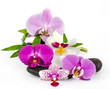 Wellness Concept: orchids, bamboo and black stones