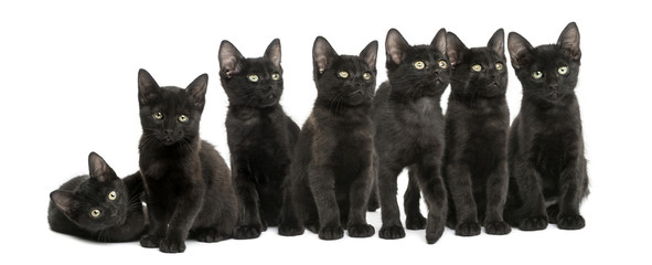 Group of Black kittens sitting together, 2 months old, isolated
