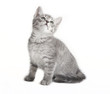 gray tabby cat looking up