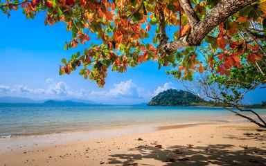 Isolated white sand beach on tropical island
