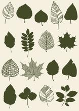 Zielnik z różnych liści