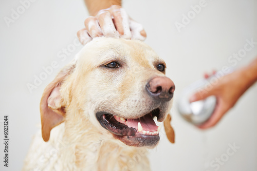 Fotobehang Hond Dog in bathroom