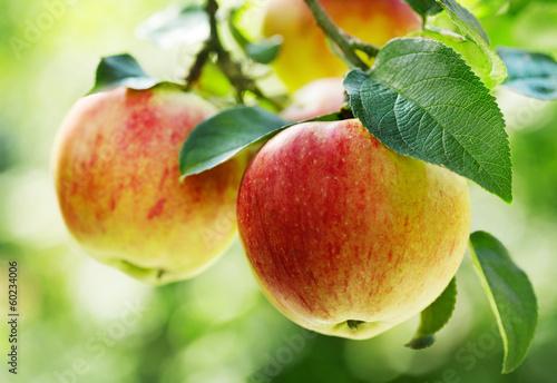 mata magnetyczna czerwone jabłka