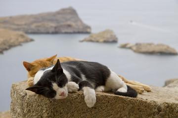 cats models