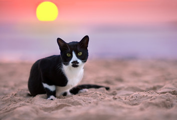 Cat siting on the beach at sunset