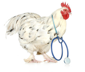 poultry health
