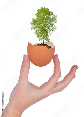 Tree growing out of the egg isolated on white
