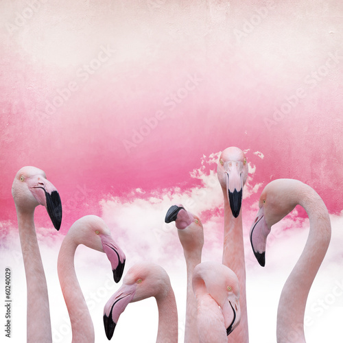 Foto op Aluminium Flamingo pink flamingo background
