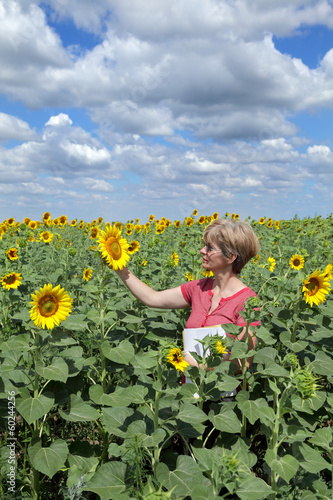 Agricultural expert inspecting quality of sunflower in field