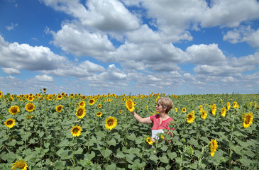 Agriculture, agronomy expert inspecting sunflower field quality