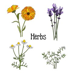 Set of aromatic herbs, isolated vector illustration