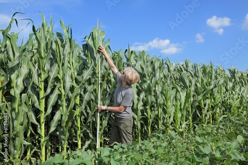 Agriculture, agronomist at farmland inspecting corn field