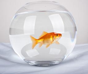 Fische im Glas