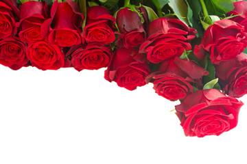 border of fresh red  garden roses