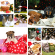 Collage of animals with Christmas decorations