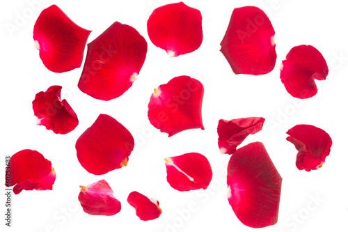 Foto Murales red rose petals