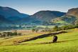 Rural scene, Lake District, UK