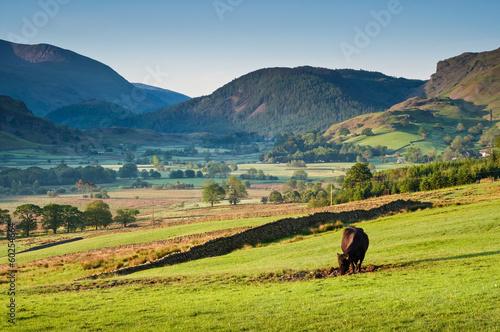 Fotobehang Rural scene, Lake District, UK